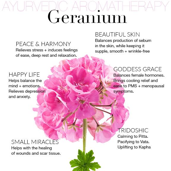 Geranium. Healer of the Broken Heart