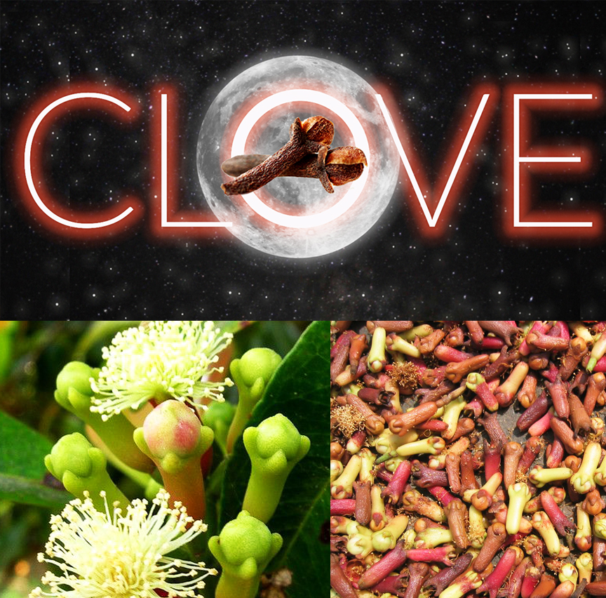 Cloves of Love and the Full March Moon
